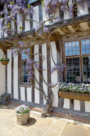 Half-timbered medieval cottage with wisteria Editorial