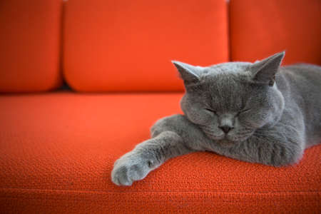 lying on couch: Cat relaxing on the couch  Stock Photo