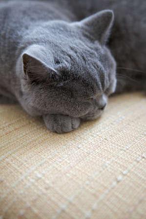 복사 공간 고양이 자 고.