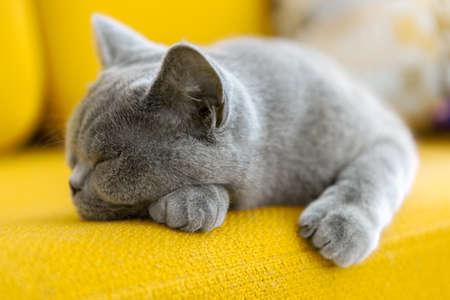 고양이 낮잠