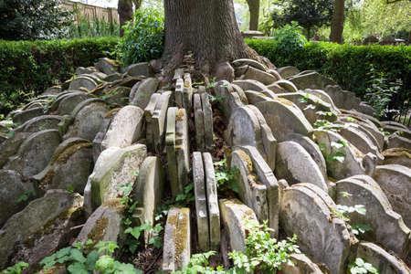 세인트 Pancras에있는 하 디 나무 오래 된 마당입니다.