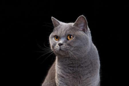 검은 색 바탕에 회색 고양이의 초상화입니다.