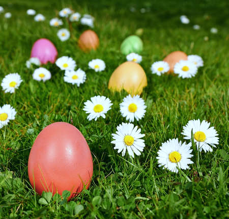 Colorful Easter eggs in a field of grass with camomiles photo