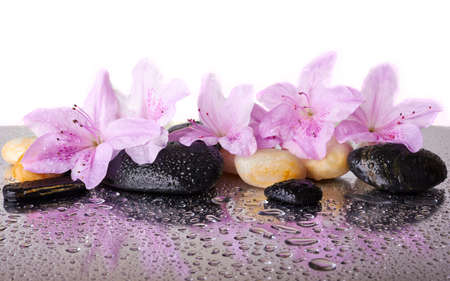 Pink flowers and black stones with reflection