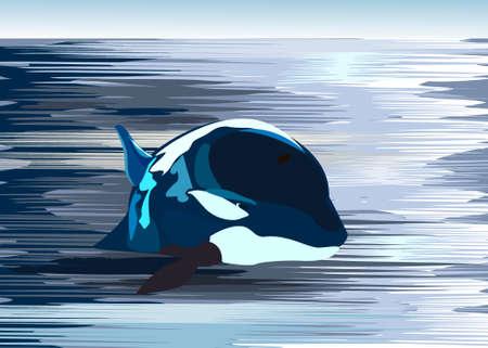tranquil scene on urban scene: Killer whale