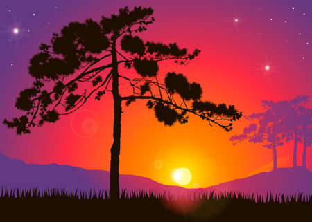 cypress tree: Highly detailed pine tree against a colorful sunset