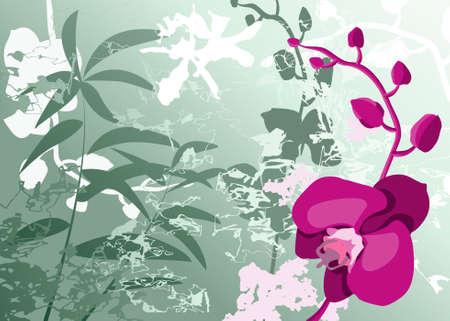feng shui: Orchids