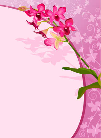 Orchid background Stock Vector - 18439084