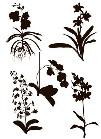 Orchids Silhouette Stock Vector - 18439081