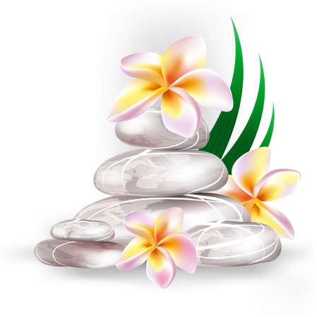 spa stones: zen stones and frangipani flowers Illustration