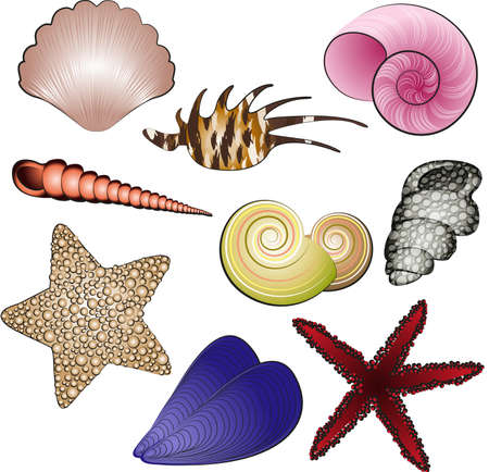 Sea Shells and Stars Vector