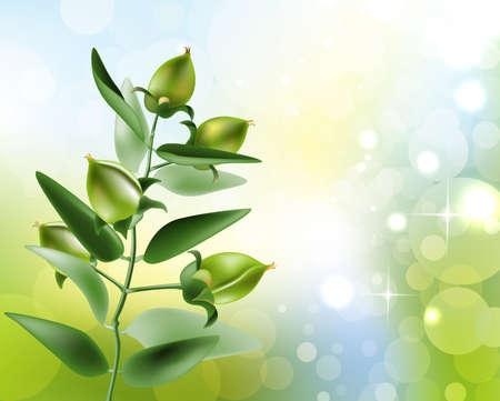 Vector illustratie van Jojoba Stock Illustratie