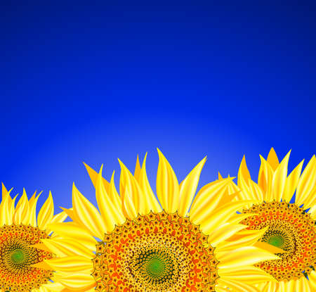 Zonnebloemen over blauwe hemel, vector illustratie