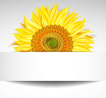 sunflower field: sunflower background, Vector illustration