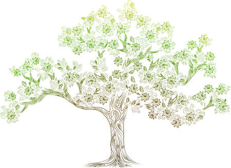 tree canopy: vector tree with flowes Illustration