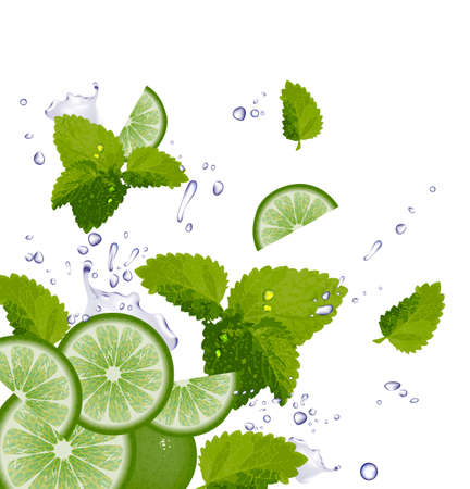 Lime, Mint and splash of water Vector