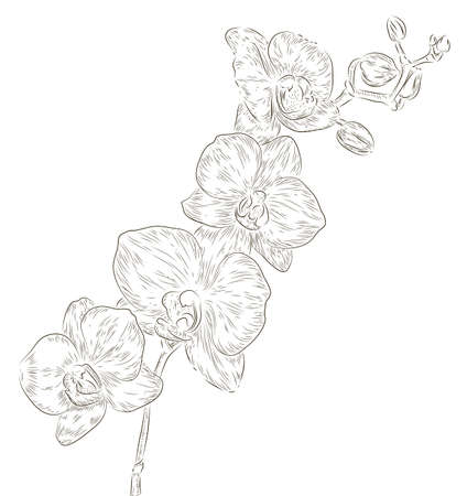 Hand drawing orchid flower  photo