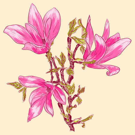 Magnolia branch  Vector