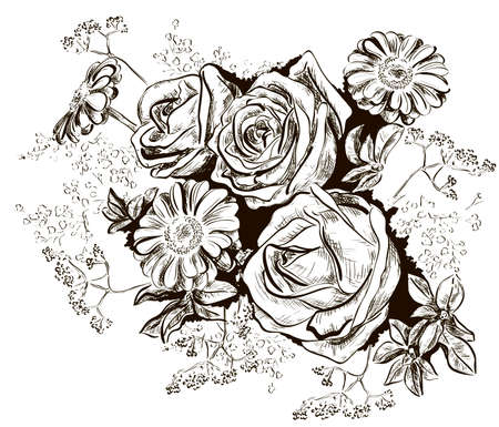 sketch of roses and Chamomile  Vector