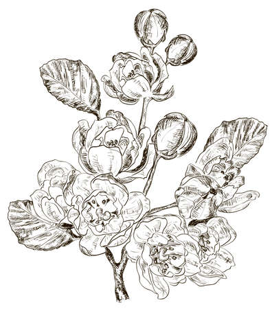 sketch of Branch of spring flower Vector