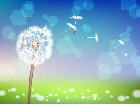 dandelion with pollens on green grass background Vector