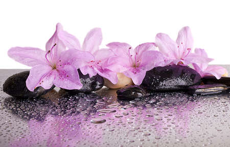 blooming. purple: flowers and black stones with reflection