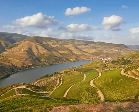 cropping: Beautiful Vineyards in Douro Valley, Portugal