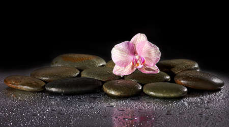 stone volcanic stones: Spa stones and orchid flower with reflection