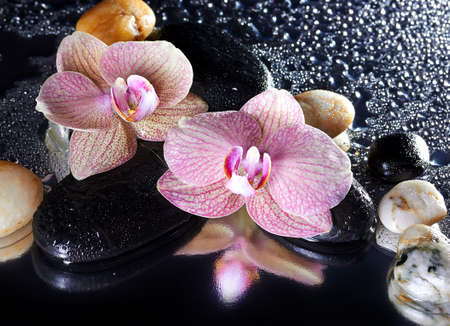 stone volcanic stones: Orchid flowers and stones with reflection Stock Photo