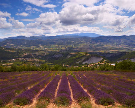 lavendin: mountains and Lavender field in Provence, France