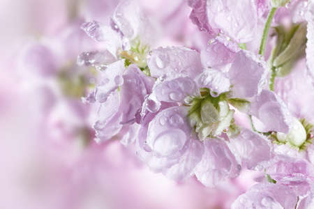 Beautiful spring background with flower bouquet photo