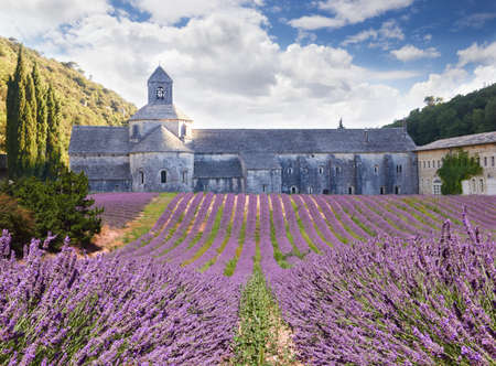 senanque: Senanque Abbey in Vaucluse, Provence, France