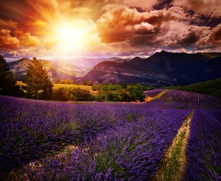 violeta: campo de lavanda paisaje puesta de sol de verano con colores contrastantes