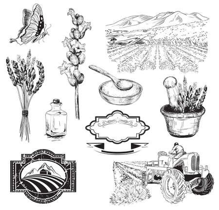 Colección del vector de gráfico boceto flores de lavanda
