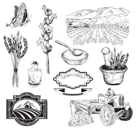 Vector collection of graphic lavender flowers sketch Stock Illustratie