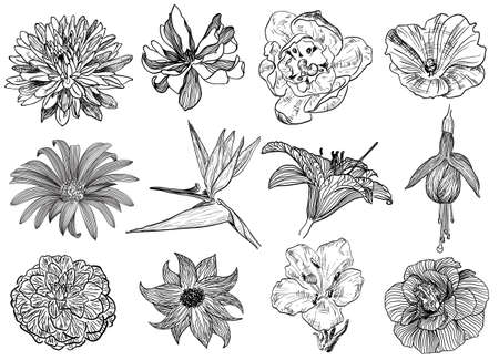 Vector illustration of flowers in sketch style: aster, magnolia, bindweed, camomile, Bird of Paradise flower, fuchsia, lily, camellia
