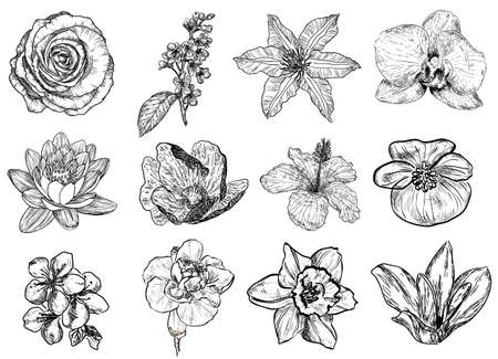 Vector illustration of flowers in sketch style: rose, bird cherry tree, lilac, clematis, orchid, lily, water-lily, lotus, hibiscus, violet, apricot, almond, cherry, carnation, narcissus, magnolia Illustration
