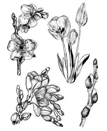 Vector illustratie van de lentebloemen in schets stijl: Sakura Tulip Freesia en Willow knoppen Stock Illustratie