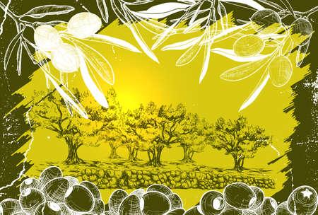 Vector illustration of Olive harvest landscape illustration