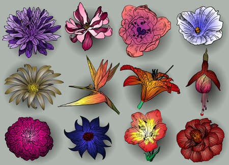 camellia: Vector set of flowers: aster magnolia bindweed camomile Bird of Paradise flower fuchsia lily camellia
