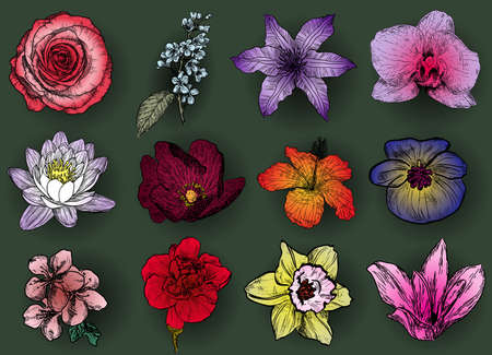 magnolia tree: Set of flowers: rose bird cherry tree lilac clematis orchid lily waterlily lotus hibiscus violet apricot almond cherry carnation narcissus magnolia Illustration