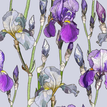 Vector Seamless pattern with Beautiful iris flowers