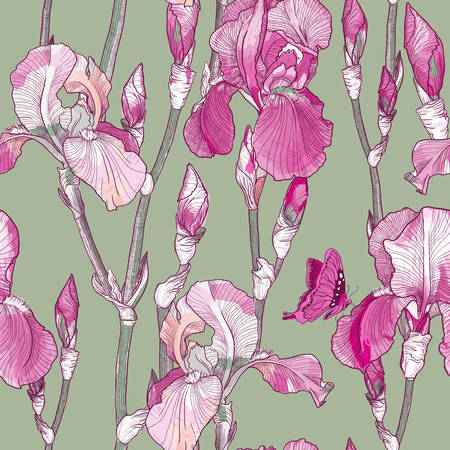 Vector Seamless pattern with Beautiful pink iris flowers Illustration