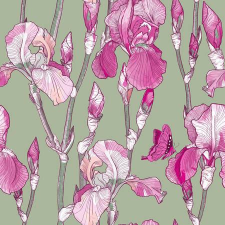 botanical gardens: Vector Seamless pattern with Beautiful pink iris flowers Illustration