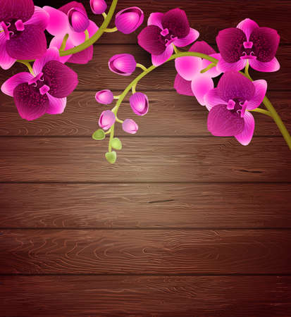 pink orchid: Vector Pink orchid flowers on wooden background Stock Photo