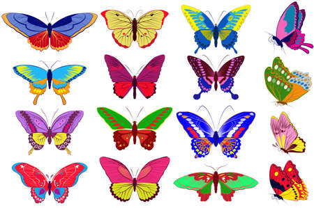 colorfull:  set of colorfull realistic butterflies