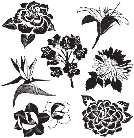 Vector flowers in sketch style: aster, magnolia, Bird of Paradise flower, lily and camellia