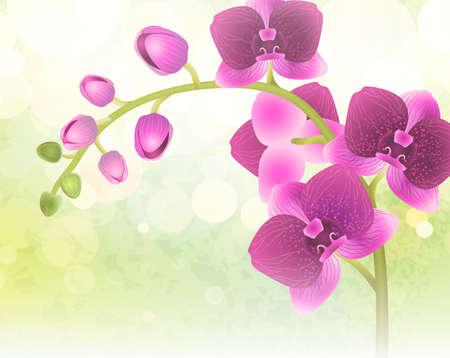 ast: Orchidee Blume auf Natur Unschärfe Illustration
