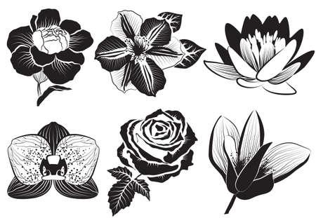 dibujos lineales: flores en el estilo de dibujo color de rosa, clematis, orquídea, lirio de agua, loto, clavel y magnolia