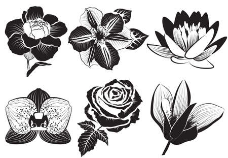 roses garden: flowers in sketch style: rose, clematis, orchid, water-lily, lotus, carnation and magnolia Illustration